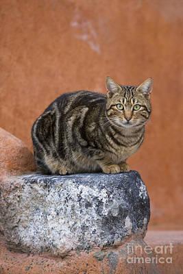 Tabby Cat On A Greek Island Poster by Jean-Louis Klein & Marie-Luce Hubert