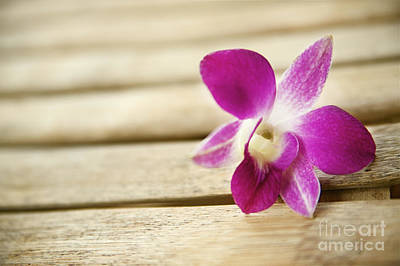 Tabletop Orchid Poster