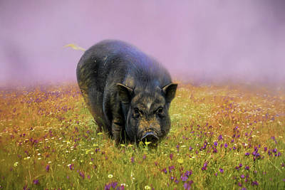 Take Time To Smell The Flowers Pot Bellied Pig Art Poster by Jai Johnson