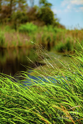 Tall Grass At Boat Dock Poster