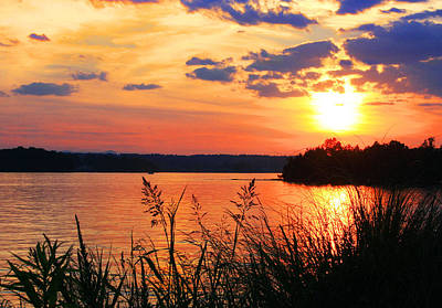 Tall Grass Sunset Smith Mountain Lake Poster