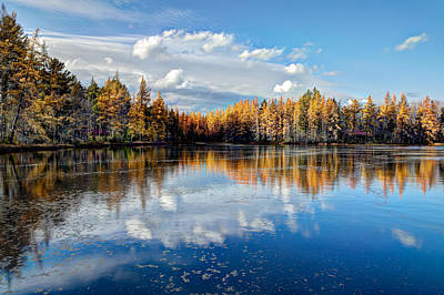Tamarack Reflections Poster by David Patterson