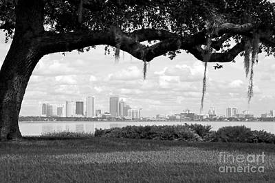 Tampa Skyline Through Live Oak - Black And White Poster by Carol Groenen