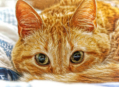 Tang The Orange Tabby Dwc Poster by Kevin Anderson