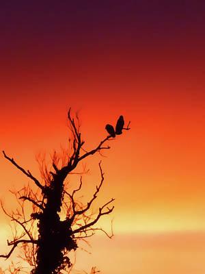 Tangerine Sunset Poster by Sharon Lisa Clarke