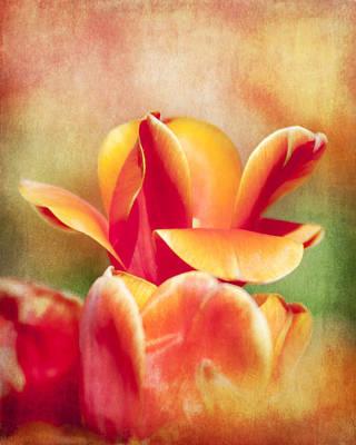 Tangerine Tulip Sorbet Poster