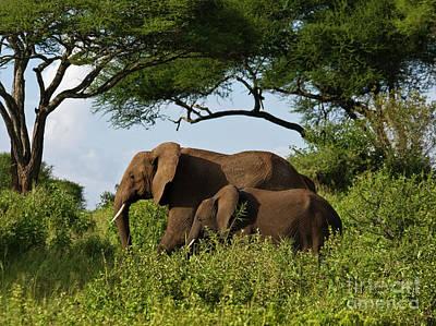 Tanzania_d338 Poster by Craig Lovell