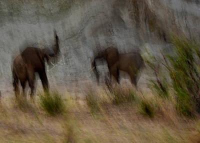 Tarangire Elephants 1 Poster