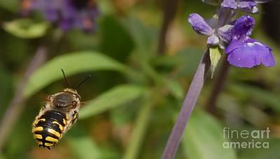 Target In Sight - Honey Bee  Poster by Steven Milner