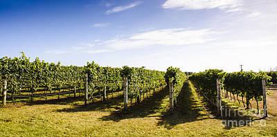 Tasmania Winery Landscape Poster