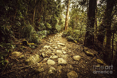 Tasmanian Forest Path Poster
