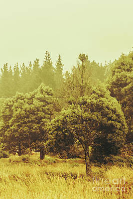 Tasmanian Grassland Details Poster