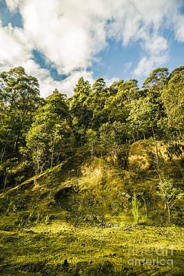 Tasmanian Rain Forest Glade Poster
