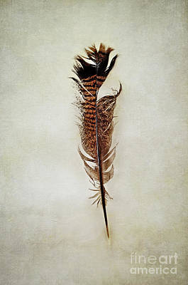 Poster featuring the photograph Tattered Turkey Feather by Stephanie Frey