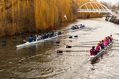 Teams Of Rowers On River Cam Poster