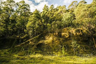 Temperate Rainforest Scene Poster