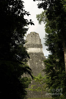 Temple In The Trees Tikal Guatemala Poster by John  Mitchell