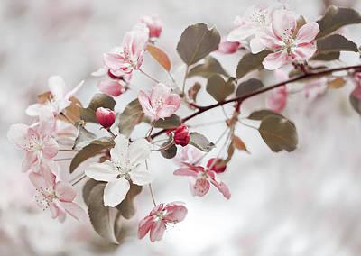Tender Pink Apple Flowers Poster by Oksana Ariskina