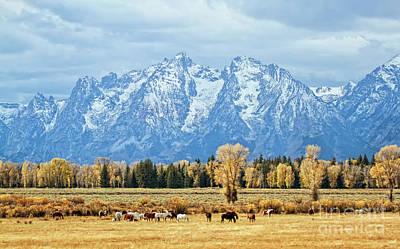 Teton Horses Poster by Carolyn Fox
