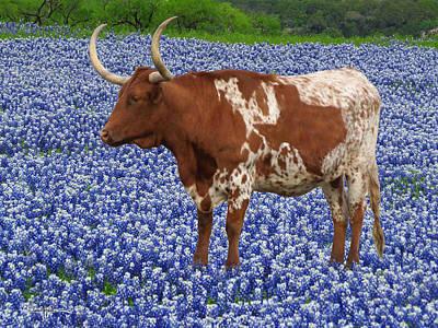 Da227 Tex And The Bluebonnets Daniel Adams Poster
