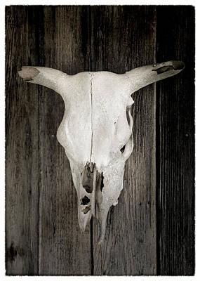 Texas Bleached Steer Skull Poster by Stephen Stookey