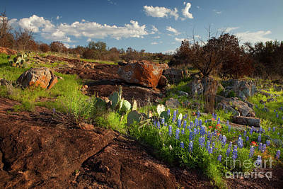 Texas Blue Bonnets And Cactus Poster by Keith Kapple