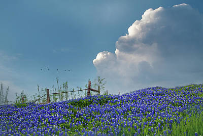Poster featuring the photograph Texas Bluebonnets And Spring Showers by David and Carol Kelly
