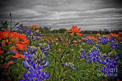 Texas Bluebonnets Poster by Jill Smith