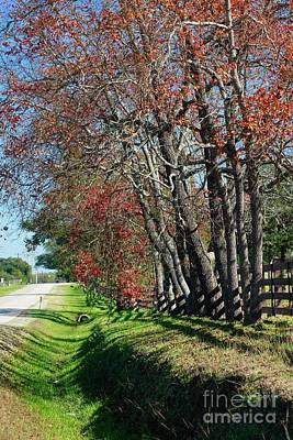 Poster featuring the photograph Texas Fall by Lori Mellen-Pagliaro