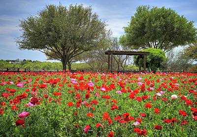 Texas Hill Country Poppies Poster by Lynn Bauer
