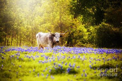 Texas Longhorn In Dreamy Light Poster by Katya Horner