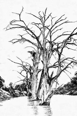 Texas Trees Poster