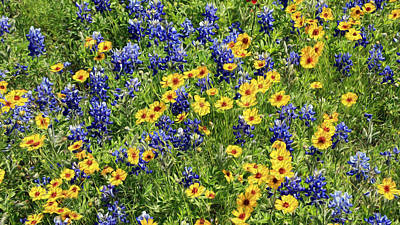 Texas Wildflowers Poster by Stephen Stookey