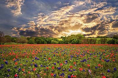 Texas Wildflowers Under Sunset Skies Poster