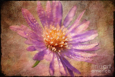 Textured Aster Poster by Lois Bryan