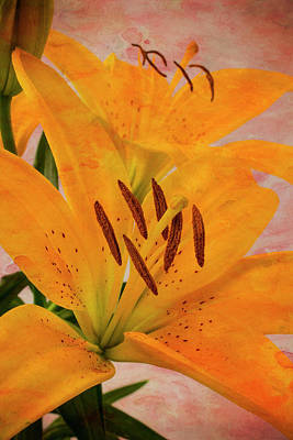 Textured Tiger Lily Poster