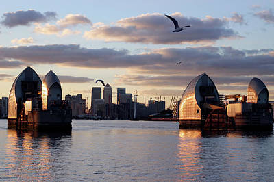 Thames Barrier And Seagulls Poster