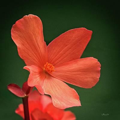 That Orange Flower Poster