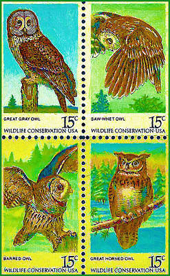 The American Owls Poster