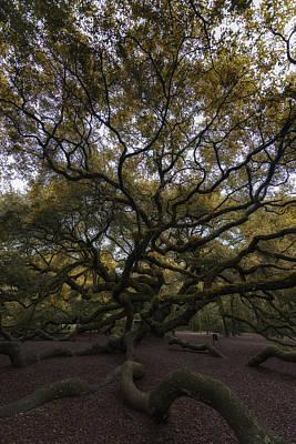 The Angel Oak Tree Poster
