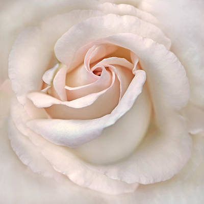 The Angel's Rose Flower Poster by Jennie Marie Schell