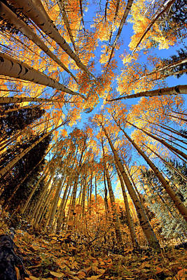 Poster featuring the photograph The Aspens Above - Colorful Colorado - Fall by Jason Politte