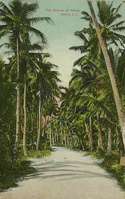 Poster featuring the photograph The Avenue Of Palms Guam Li by eGuam Photo
