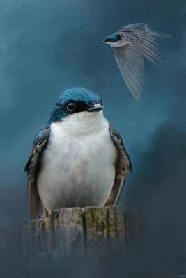 The Beautiful Tree Swallow Poster by Jai Johnson