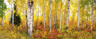 Poster featuring the photograph The Beauty Of The Autumn Forest by Tim Reaves