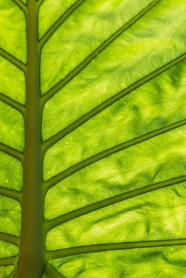 The Big Leaf Poster