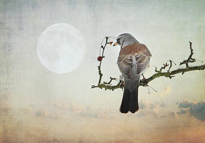 The Bird And The Moon Poster