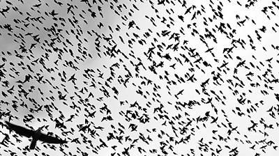 The Birds Poster by John Velasquez