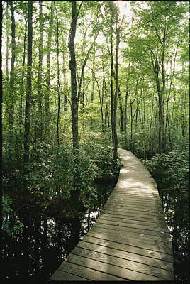 The Boardwalk Nature Trail In Great Poster by Skip Brown