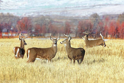 Poster featuring the photograph The Bucks Stop Here White-tail Deer  by Jennie Marie Schell